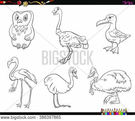Black And White Cartoon Illustration Of Birds Species Animal Characters Set Coloring Book Page