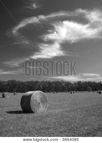 Fall Hay B&W1