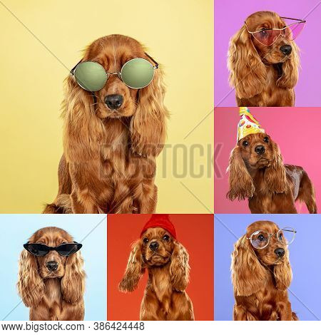 Fashionable. Stylish Adorable Dogs Posing. Cute Doggies Or Pets Happy. The Different Purebred Puppie