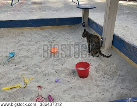 Defecation Of A Cat On A Childrens Sandbox. Danger On The Playground