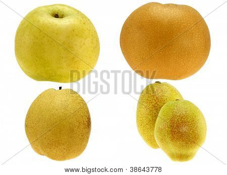 Golden Pear, Japanese Snow Pear, Chinese Pear, Bartlett Pear, isolated on white