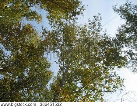 A Clear Cloudless Sky Is Visible Through The Closing Branches Of Trees Overhead.