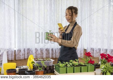Beautiful Caucasian Housewife Grows Microgreens At Home And Takes Pictures For Social Networks. Fres
