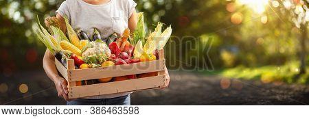 Farmer Woman Holding Wooden Box Full of Fresh Vegetables. Harvest