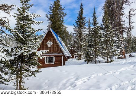 Awe Winter Landscape In A Coniferous Forest Covered With Freshly Fallen Snow In Sunny Day. Cozy Plac