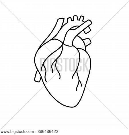 Anatomical Heart Isolated. Cardiology Diagnostic Center Sign. Human Contoured Heart Flat Design. Med