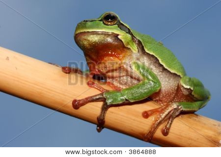 Little tree frog on set the branch poster