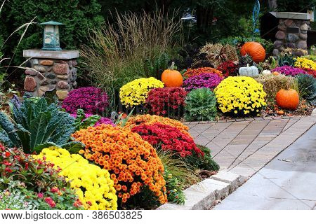 Colors Of Autumn Background. Bright Colors Fall Season Outdoor Decoration With Potted Chrysanthemums