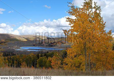 Yellow Aspen Tree, Autumn Landscape, Utah, Usa