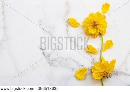 Yellow Flowers Cosmos Arrangement Flat Lay Postcard Style On Background White