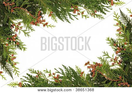 Winter greenery border of cedar cypress leaf with pine cones over white background.