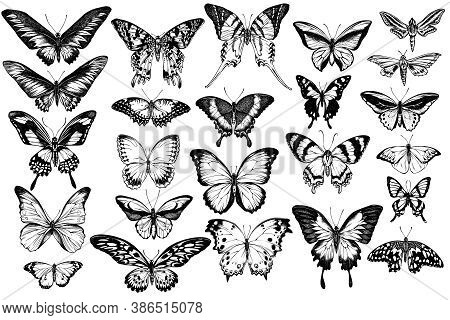 Vector Set Of Hand Drawn Black And White Great Orange-tip, Emerald Swallowtail, Jungle Queens, Plain