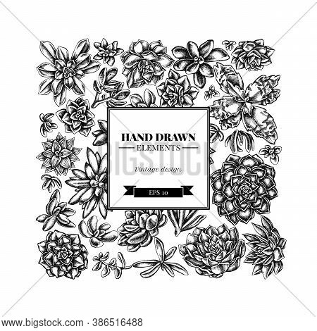 Square Floral Design With Black And White Succulent Echeveria, Succulent Echeveria, Succulent Stock