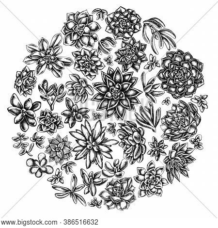 Round Floral Design With Black And White Succulent Echeveria, Succulent Echeveria, Succulent Stock I