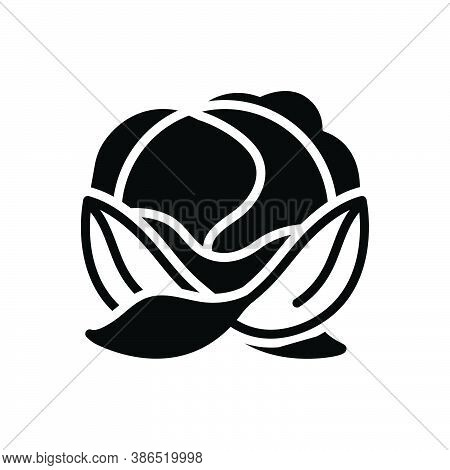 Black Solid Icon For Cabbage Leafy Green Foliage Harvest Ingredient Healthy Vegetable Agriculture Cu