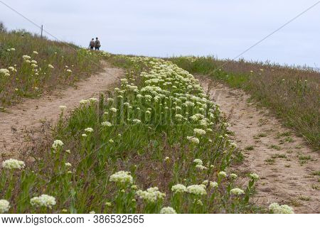 Rural Dirt Road To The Hill Among Blooming Flowers. Summer Landscape Of The Steppe. Photo