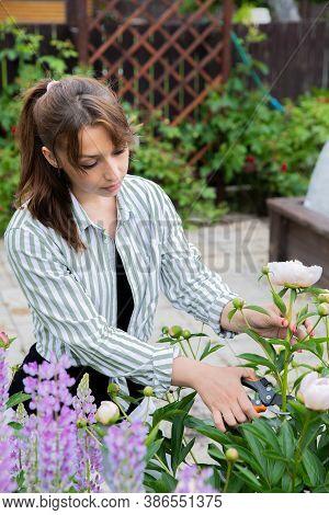 Young Beautiful Woman Florist Cuts Fresh Blooming Peonies From Flower Garden, Female Gardener Take C