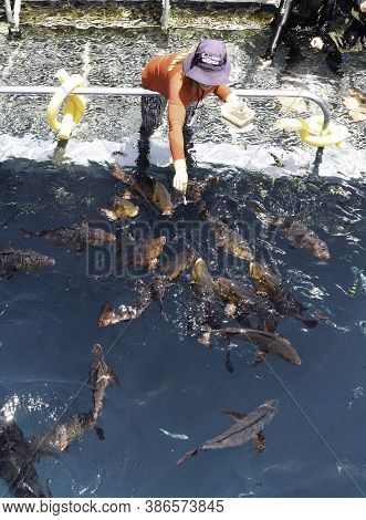 The Great Barrier Reef, Australia - March 17th, 2020: Local fish feeding on a pontoon wharf at the great barrier reef, Australia