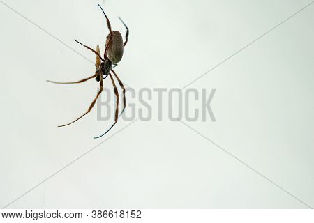 An Arachnid Sits In Its Web.selective Focus