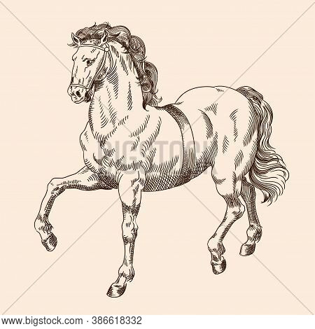 Galloping Horse With Harness Isolated On Beige Background.