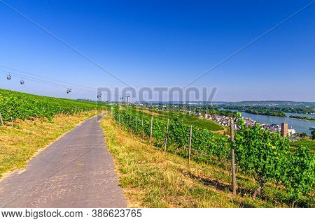 Road Path In Vineyards Green Fields With Grapevine Rows On Hills In Rhine Gorge Or River Rhine Valle