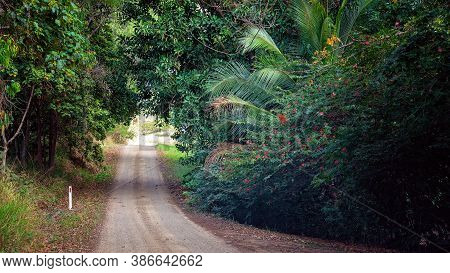 A Dirt Road Through A Canopy Of Country Bushland