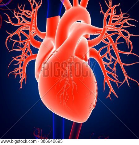 Human Heart Anatomy For Medical Concept 3D Rendering