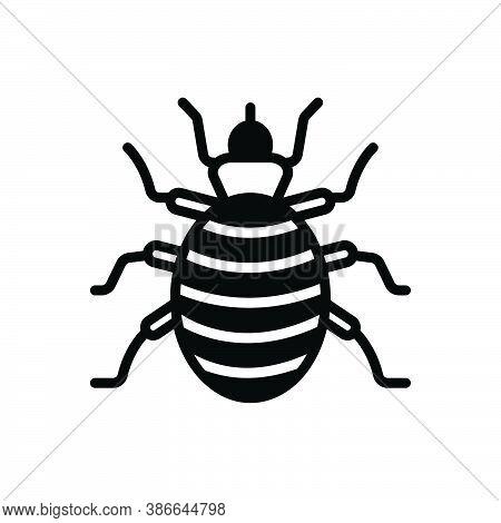 Black Solid Icon For Flea Bloodsucking Bite Plague Bug Chigoe Norfolk-howard Disease Bedbug Chinch D