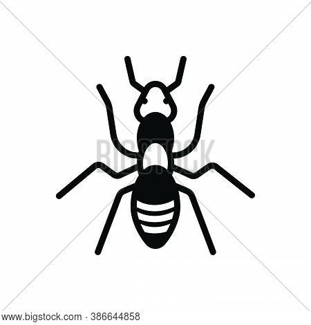 Black Solid Icon For Ant Leg Fauna Critter Small Pest Nature Animal Insect