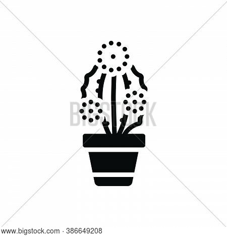 Black Solid Icon For Prickly-pearprickly Pearcactus Desert Cacti Green Mediterranean Mexican Natur