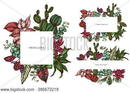 Floral Frames With Colored Ficus, Iresine, Kalanchoe, Calathea, Guzmania Cactus Stock Illustration