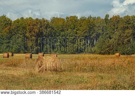 Large Sloping Field, Meadow. Far Away Is A Green Forest, Trees. Autumnal Scene Fall And Farming, Hay