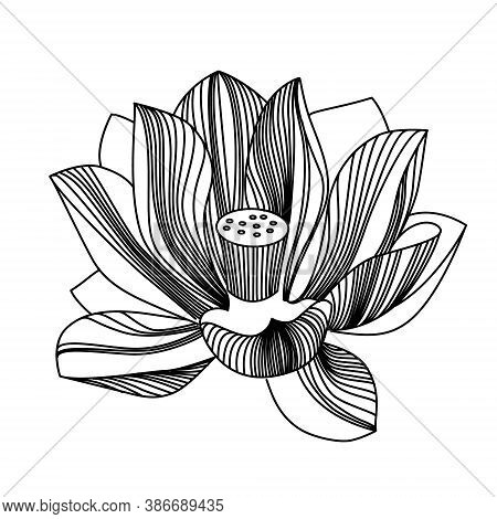 One Black And White Water Lily Flower With Blossoming Petals. Elegant Line Graphics. Vector Illustra