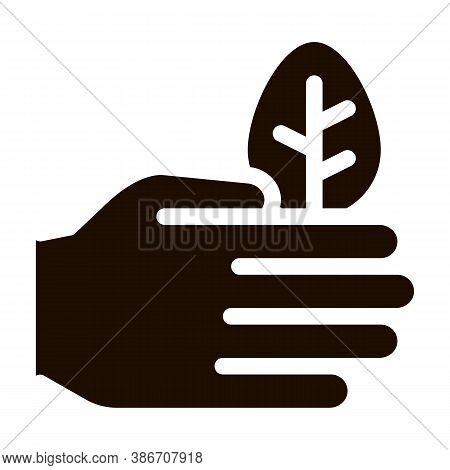 Hand Care Wood Leaves Tree Vector Icon. Organic Cosmetic, Natural Wood Component Pictogram. Eco-frie