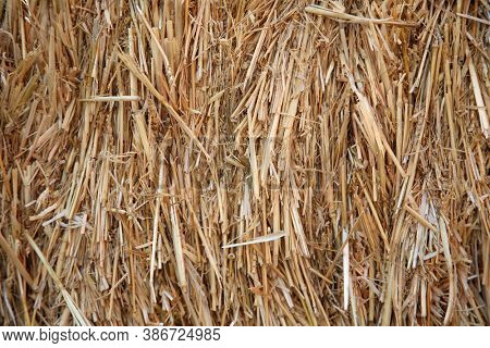 Hay. Hay Bails. Seamless texture hay, straw. Hay Background.