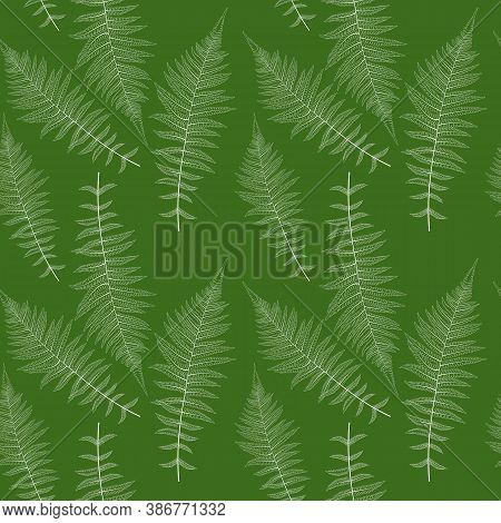 Fern Leaf Vector Fern Leaf Vector Seamless Pattern Background Illustration
