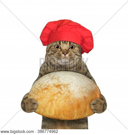 A Cat Baker In A Red Chef Hat Holds A Big Loaf Of Bread. White Background. Isolated.
