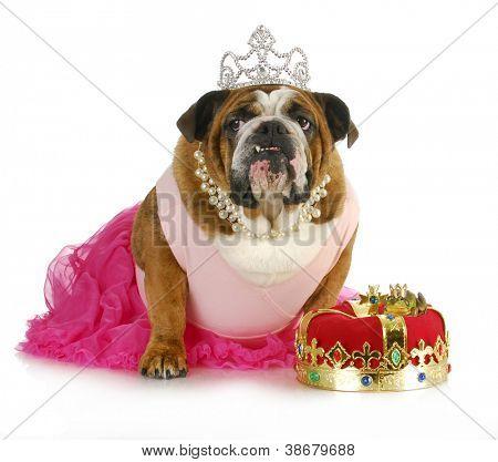princess kissing a frog hoping for a prince - bulldog kissing a real toad wearing a crown