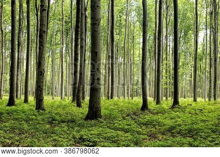 Plenty Of Tree Trunks In The Leaf Wood Forest