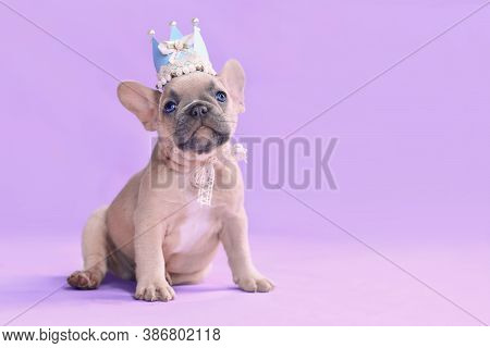 Small French Buldog Dog Puppy Wearing A Paper Crown With Lace And Ribbons On Purple Packground With