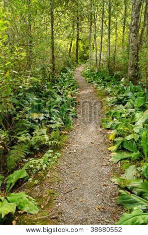 Fragment of a trail in Mount Baker Visitor Center, WA, USA.