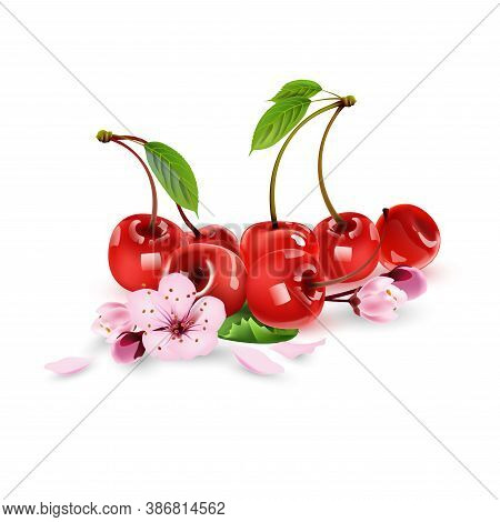 Set Of Ripe Red Cherries With Cherry Blossoms. Realistic 3d Isolated Vector Illustration