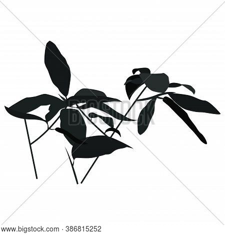 The Shape Of The Shadows From Branches And Leaves. Black Contour Of A Tropical Bush To Overlap The D