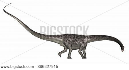 Diplodocus Dinosaur Walking Isolated In White Background - 3d Render