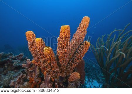 Caribbean Coral Reef Off The Coast Of The Sland Of Bonaire