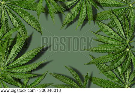 Marijuana Or Cannabis Green Leaves Against Gray Background. Alternative Medicine Or Drug, Frame. Clo