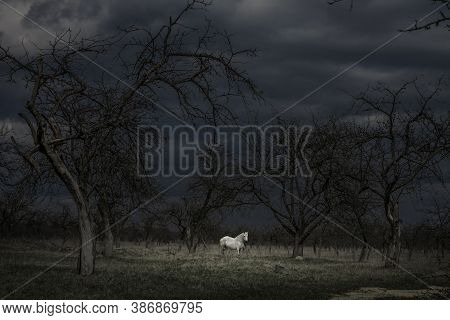 White Horse In A Dark Scary Forest