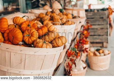 Red Pumpkins In Baskets By Store On Farm. Autumn Fall Harvest. Store Outdoor Decoration. Thanksgivin