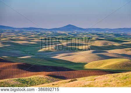 Green Crop Fields In The Palouse Region Of Eastern Washington, Usa.