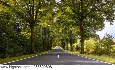 Tree-lined Avenue Through Thuringia On Summer Day